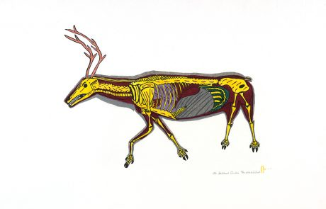 Image of a caribou skeleton in yellow, grey and brown with pink antlers.