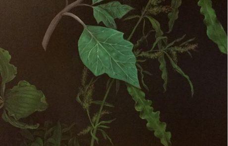 image of green foliage on black background